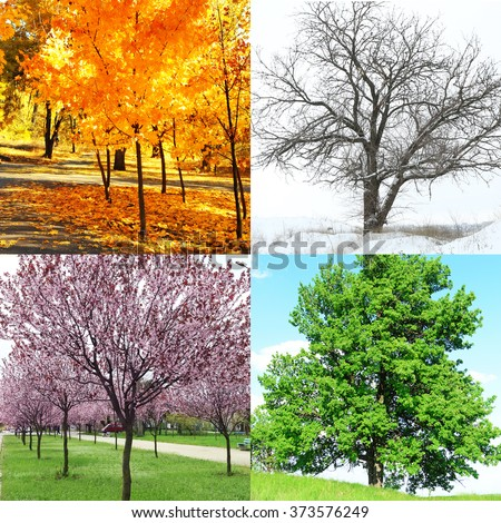 Four Seasons Collage Several Photos Beautiful Stock Photo ...