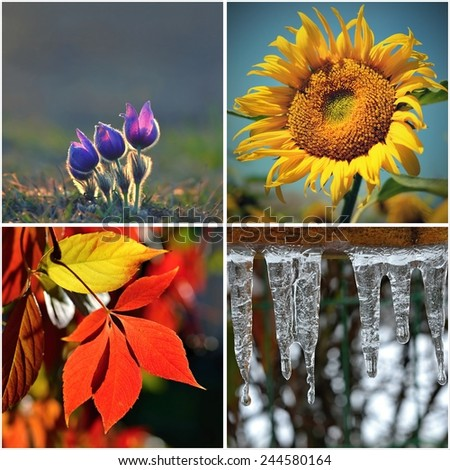 Four seasons collage: Spring, Summer, Autumn, Winter. Flower, sunflower, leaves and icicles. Colorful natural background. - stock photo