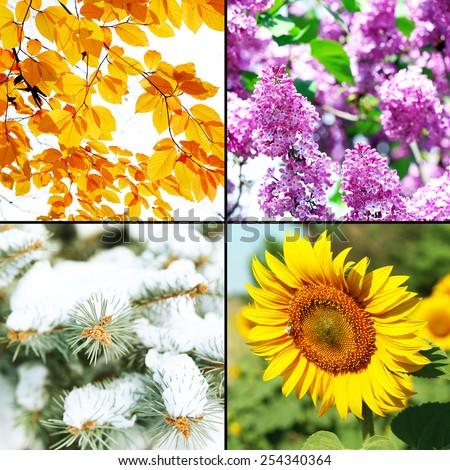 Four seasons collage: winter, spring, summer, autumn - stock photo