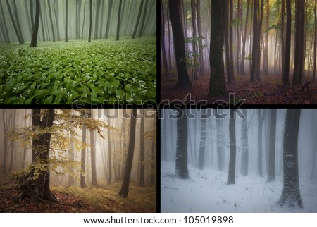 four seasons forest landscapes - stock photo