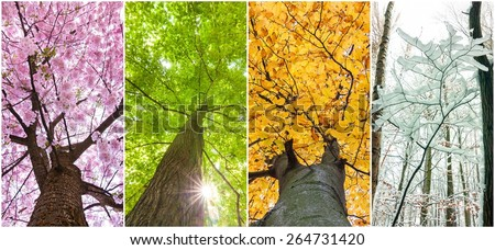 four seasons in the treetops - stock photo