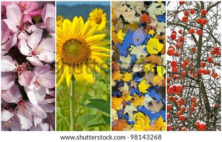 Four seasons. Nature in spring, summer, autumn and winter. - stock photo