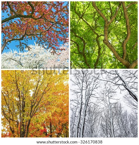 Four seasons. Trees in spring, summer, autumn and winter. Collage of 4 photos.
