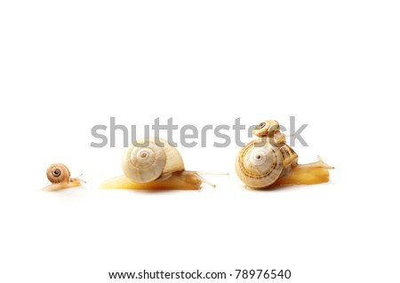 Four snails representing family concept - stock photo