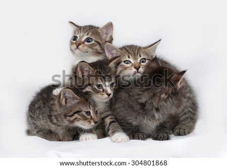 Four striped and white kitten sitting on gray background