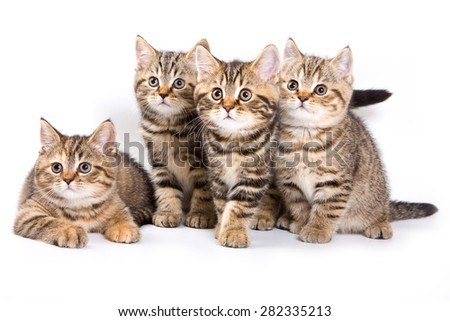 Four striped kitten (isolated on white)