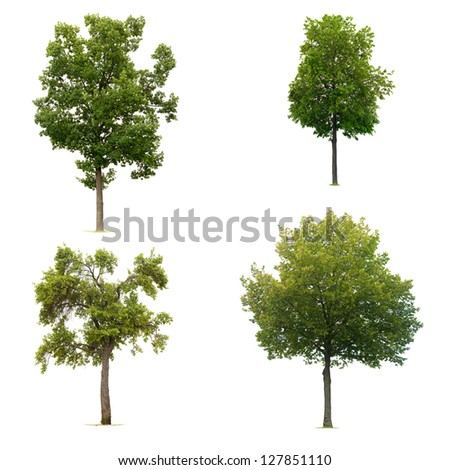 Four trees collection isolated on white background - stock photo