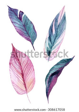 Four tropical leaves isolated on white background. Hand drawn exotic leaves illustration in watercolor. - stock photo
