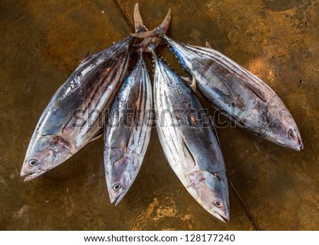 Four tuna for sale at the wholesale fish market - stock photo