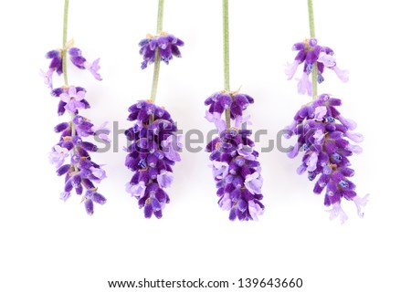 Four twigs of lavender flower over white background - stock photo