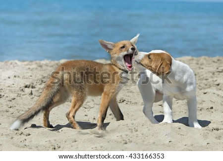 fox and dog on the beach, in France