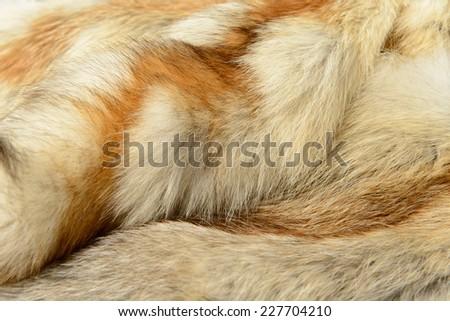 Fox fur texture - stock photo