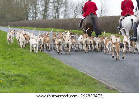 Fox Hunt, horses and hounds