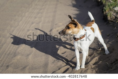 fox terrier a young dog, on the nature - stock photo