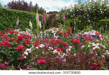 Foxgloves (Digitalis) Amongst Red and Pink Roses (Rosa) in a Flowerbed in an English Country Cottage Rose Garden in Devon, England, UK - stock photo
