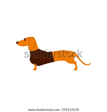 Foxy colored dachshund in glasses with dark lenses and red frame and brown waistcoat decorated with red pattern isolated on white background. Logo template, design element - stock photo
