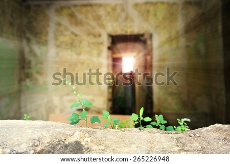 Fragile green plant growing in an old, dilapidated, abandoned house, with sun in the background and lens flare. Concept of hope, new life and new beginning. - stock photo