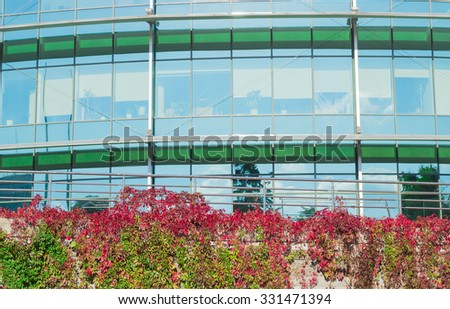 Fragment of a modern office building with the wall in the foreground, covered Virginia creeper with green and deep red to burgundy foliage autumn  - stock photo