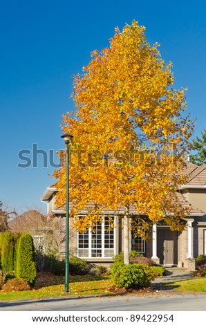 Fragment of a nice house over fantastic yellow tree in Vancouver, Canada. - stock photo