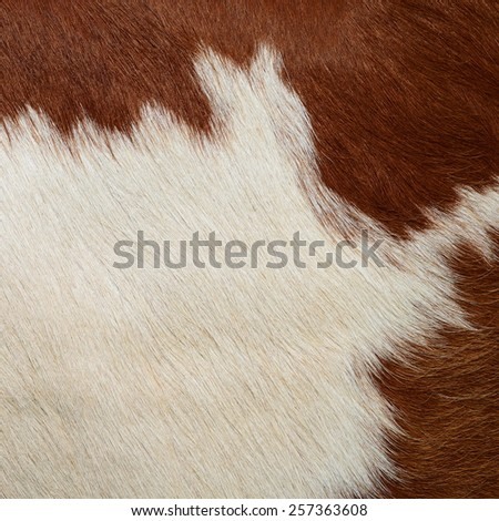 Fragment of a skin of a cow - stock photo