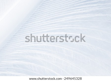 fragment of blue feather close up - stock photo
