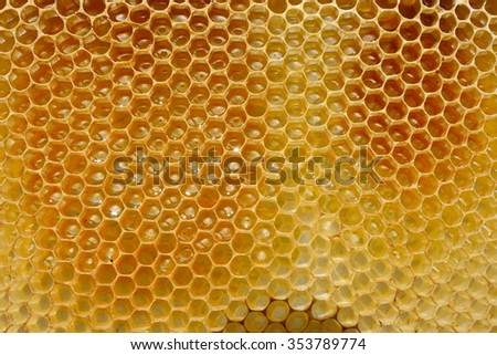 Fragment of honeycomb with full cells - stock photo