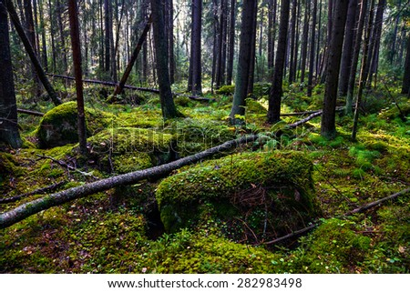 fragment of karelian forest