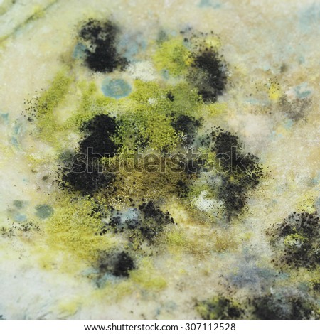 fragment of not fresh moldy bread - stock photo