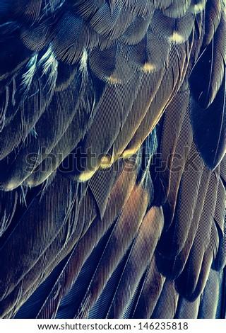 Fragment of plumage of bird. - stock photo