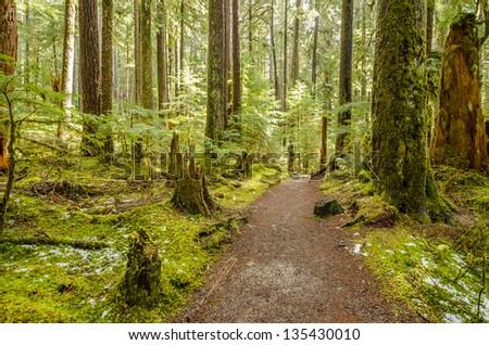 Fragment of Soleduck trail in Olympics park, Washington, USA - stock photo