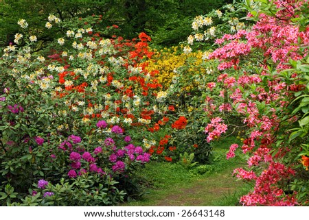 Fragment of the garden with blooming colourful bushes