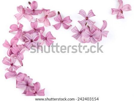 Fragrant lilac blossoms  - stock photo