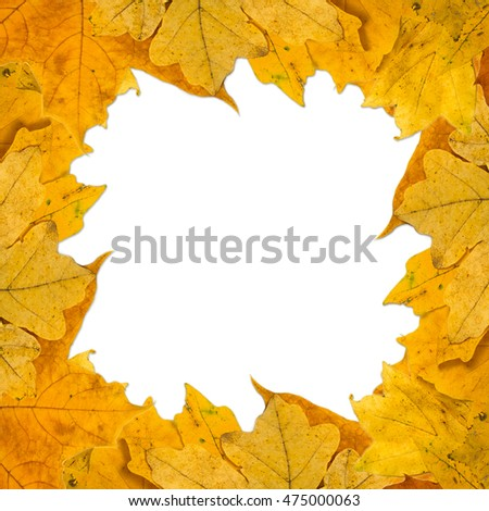 frame composed of colorful autumn leaves over white