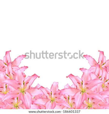 Frame Flowers Pink Lilies on white background,decorative card