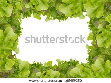 Frame fresh green salad - stock photo