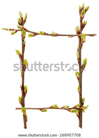 Frame fresh young budding spring branches. The branches of a cherry. Isolated on white background. - stock photo