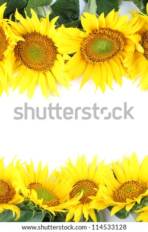 Frame made from beautiful yellow sunflowers isolated on white background - stock photo