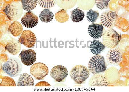 Frame made of seashells on white - stock photo