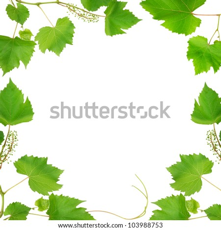frame made of vine leaves isolated on white background