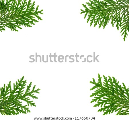 Frame made with thuja twigs isolated on white, copyspaced - stock photo