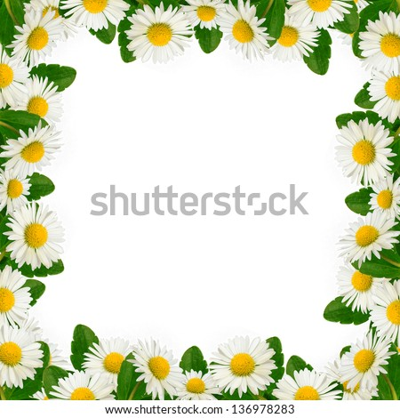 Frame of daisies and leaves on the white background