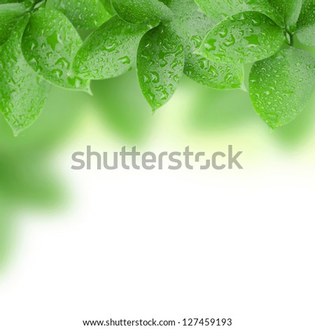 frame of green leaves with water drops