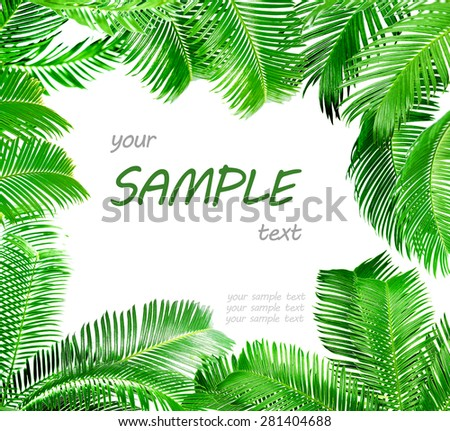 Frame of green palm leaves isolated on white - stock photo