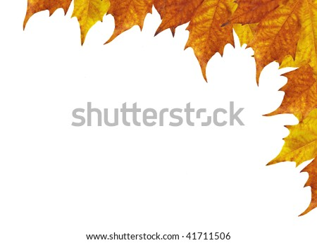 frame of maple leaves