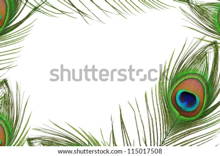 Frame of peacock feather eye on white background - stock photo
