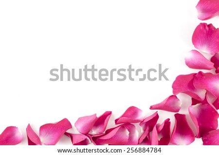 Frame of red rose petals on white background - stock photo