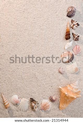 Frame of sea shells on sand, warm light - stock photo