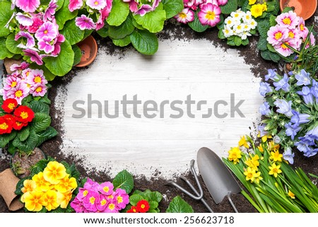 Frame of spring flower and gardening tools on old wooden background - stock photo