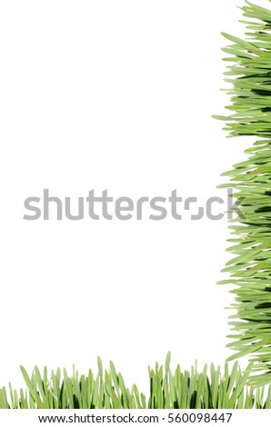 frame of the green grass on white background