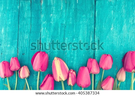 Frame of tulips on turquoise rustic wooden background. Spring flowers. Spring background. Valentine's Day and Mother's Day background. Top view. - stock photo